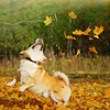 summer_skin: (Misc- (animal) It's fall! OMG FALL!)