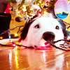 summer_skin: (Misc- (seasonal) dog xmas lights)