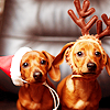 summer_skin: (Misc- (seasonal) xmas wiener dogs)
