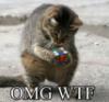 sothe: (OMG cat cube)