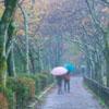 genarti: ([misc] misty morning sidewalk)