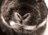 bunnynose: (Default)