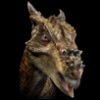 "greygirlbeast: (""Dracorex"")"