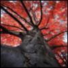 greygirlbeast: (The Red Tree)