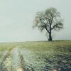 thedevilsminion: (tree)