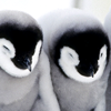 telly: (Cute - penguin cuddle)