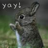 telly: (Cute - bunny yay!)