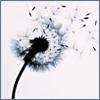sophie8: (Dandelion)
