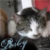 dannysgirlsg1: (Personal - Riley)
