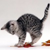 readingwhiz89: (Kitten // Playing)