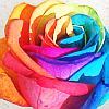 roxy: (rainbow rose by hero.png)