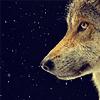 kantian: (Wolf)