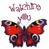 ginnyvos: Watching You (Butterfly Watching You)