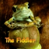 fiddlingfrog: (Default)