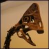 threeringedmoon: (Oviraptor)