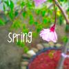 spotzle: (spring)