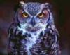 sephia: (Owl)