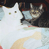 sekitou: cats, Binkley and Bailey, on the futon (BaileyBinkley)
