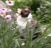 marcicatverse: (kismet flowers JAD)