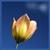 neferjournal: (tulip)