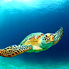 ext_387179: A sea turtle swimming (Default)