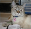pilgerin: (Sparky the Cat)