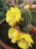 pilgerin: (cactus)