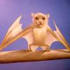 missingislands: (cute bat)