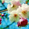 instalight: (flowery two)