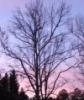 vknask: (dawn tree)