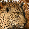 aninreh: (alpha kitty)