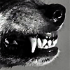 wolflord_andain: (wolf teeth)