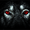 wolflord_andain: (wolf eyes)