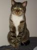 meepodeekin: (proud cat)