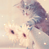 virginiahotchner: Gorgeous kitten playing with two pink flowers. (flowers, kitten, pink) (Default)