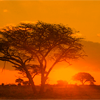 one_man_army: ([stock: african sunrise])