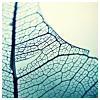 cinnabarheart: (Color - Turquoise Leaf)