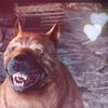 sarasa_cat: (DA Dog)