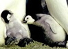 ksmith: (baby penguins)
