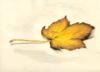 ksmith: (gold leaf)