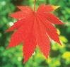 ksmith: (orange leaf)