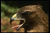 ksmith: (hawk)