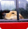 ksmith: (raindog)
