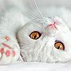 crimsonseastorm: (*cuddles kitty*)