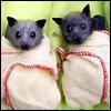 glamjam: (bat babies ♥)