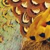 piwakawaka: (feathers)