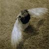 piwakawaka: (girl with wings)