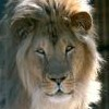 garvey: (Lion)