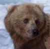 garvey: (Bear)