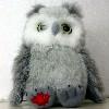 garvey: (Canadian Owl)